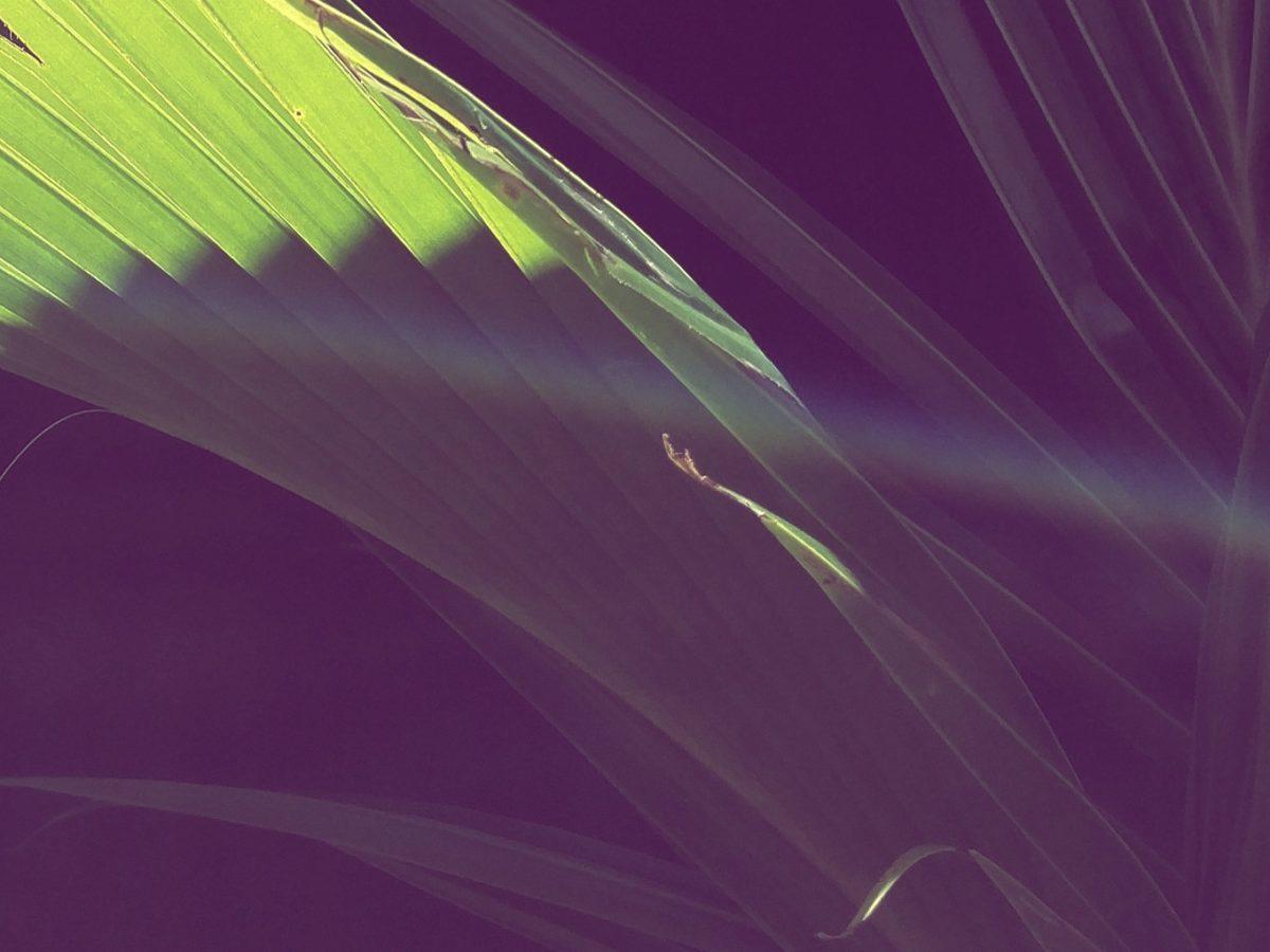 free-playlist-by-Pierre-jpeg